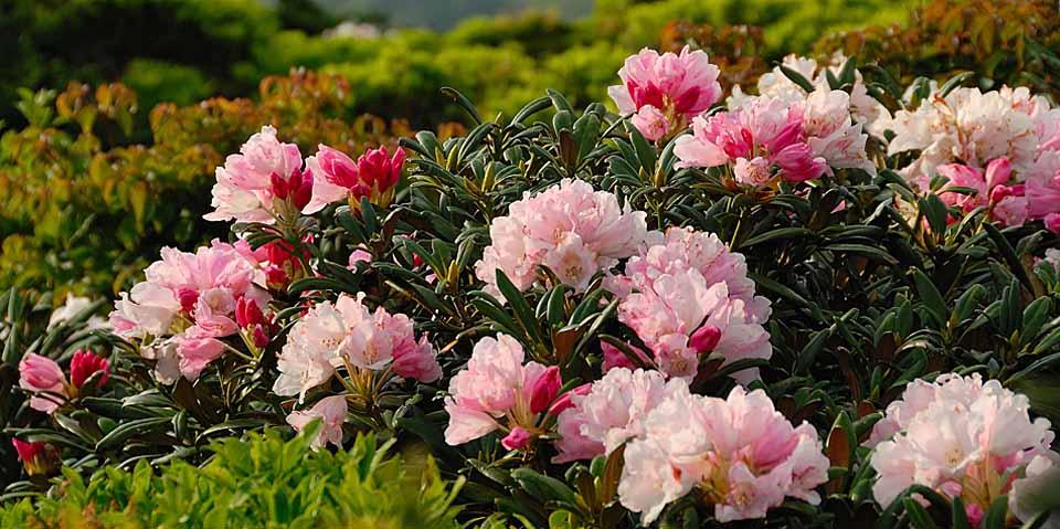 屋久島の白谷雲水峡の苔むす森