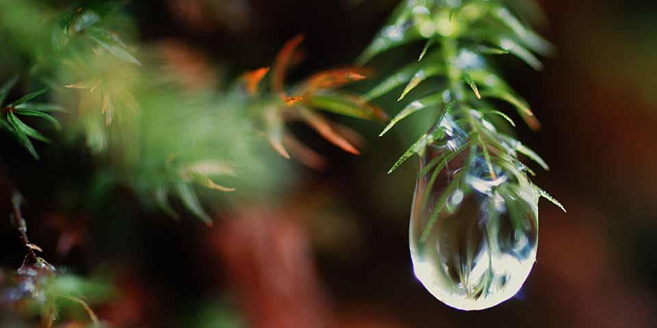 環境省・日本エコツーリズム協会のエコツーリズム大賞特別賞(環境大臣賞)受賞