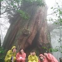 白谷雲水峡(半日・弥生杉コース)