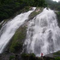 半日白谷雲水峡+島内観光ツアー